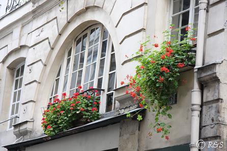 パリの花9IMG_2495