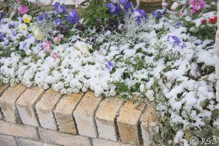 雪の花壇IMG_5478