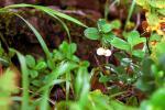 ニセコアンヌプリの白い実