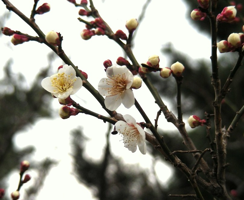 府庁・御所・寺町 032
