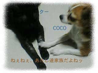 060724_くうちゃんここ