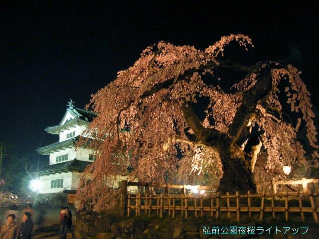 弘前城夜桜-01