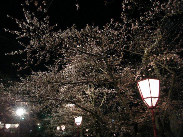 弘前城夜桜-03