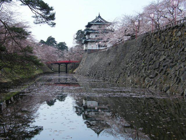 弘前桜-03