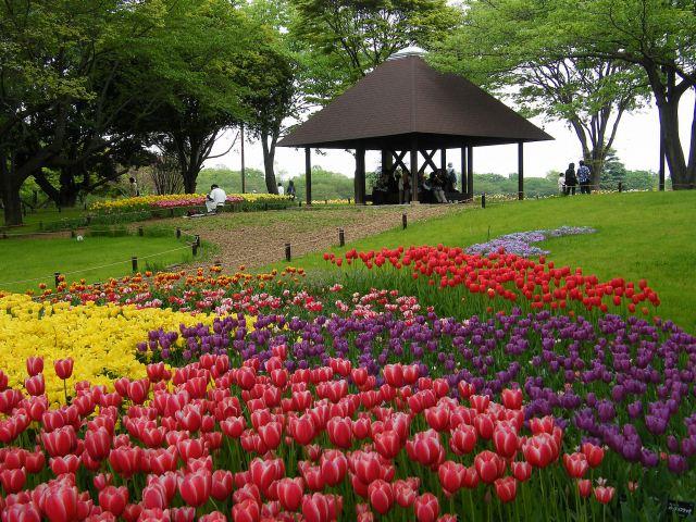 昭和記念公園-01