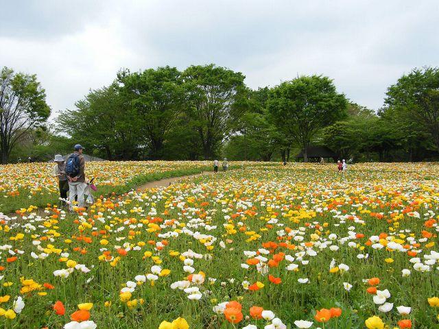 昭和記念公園-02