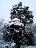 我が家の杉