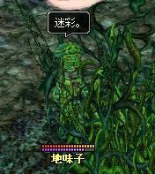 毒キノコイメージ画像