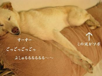 sleep311