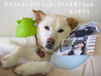 sakuraokan419