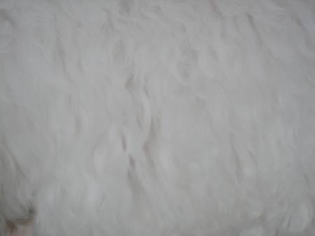 白い日(R)