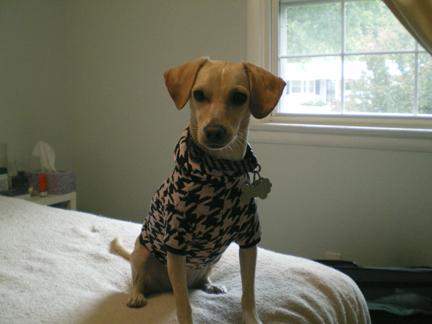 zoe-sweater