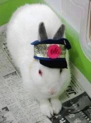 ウサギの名誉駅長