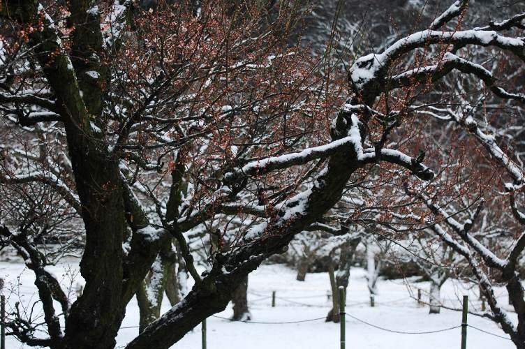 栗林公園雪景色 101