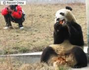 陝西省西安市の秦嶺野生動物園で