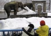 長野市の茶臼山動物園で