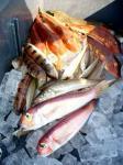 相模湾の魚たち