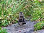 城ヶ島のネコ
