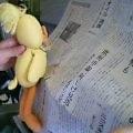 新聞を読むカンコ