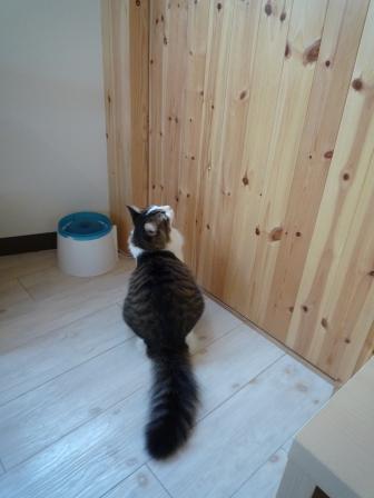猫カフェ 3