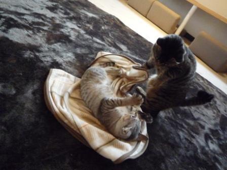 猫カフェ 12