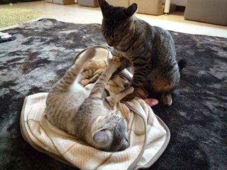 猫カフェ 15