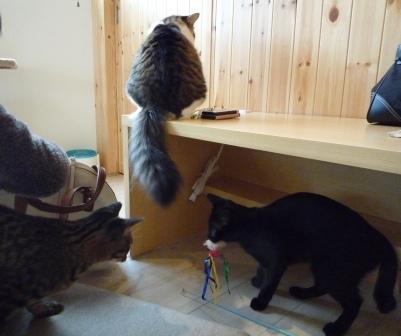 猫カフェ 25