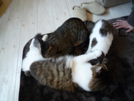猫カフェ 20