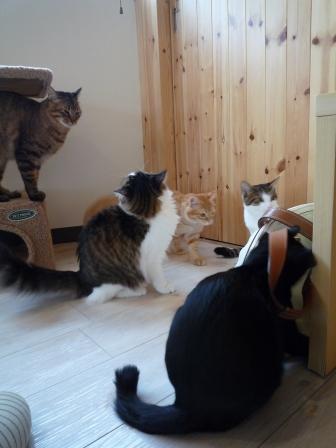 猫カフェ 18