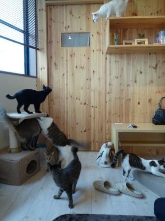 猫カフェ 24