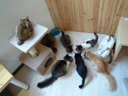 猫カフェ 19