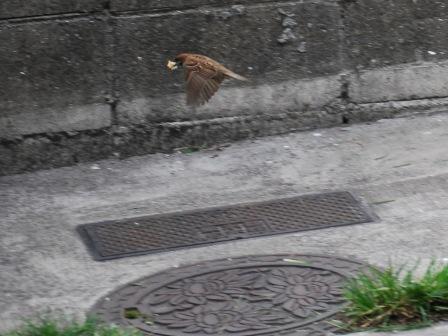 太郎'S次郎'S  逃げる