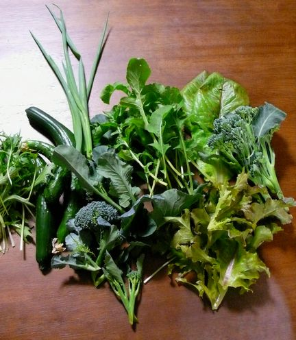 0531収穫野菜