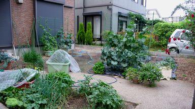 0531菜園