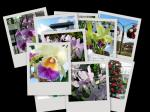 花collage