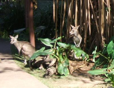 kangalooippai.jpg
