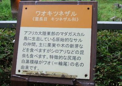waonakata.jpg