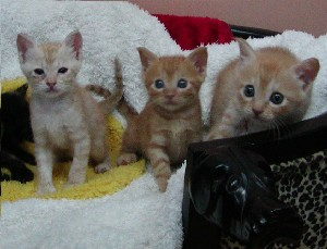 kitty080911.jpg