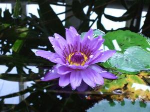 botanicalgarden0003.jpg