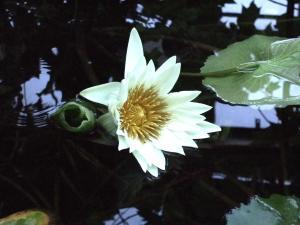 botanicalgarden0004.jpg