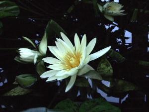 botanicalgarden0006.jpg