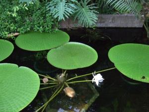 botanicalgarden0010.jpg