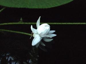 botanicalgarden0011.jpg