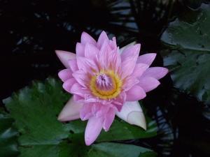 botanicalgarden0012.jpg