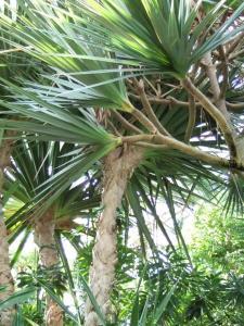 botanicalgarden0014.jpg
