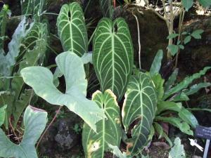 botanicalgarden0015.jpg