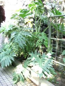 botanicalgarden0016.jpg