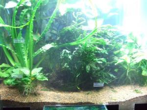 botanicalgarden0019.jpg