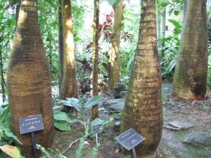 botanicalgarden0023.jpg
