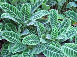 botanicalgarden0024.jpg